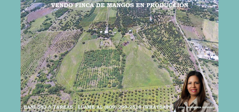 Vendo Finca de 584 tareas de mangos en Baní