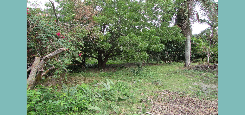 Árboles frutales en 5 tareas