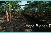 HBR548, Vendo Finca de Bananos Orgánicos en Producción
