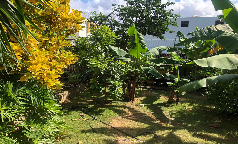 Patio con árboles frutales